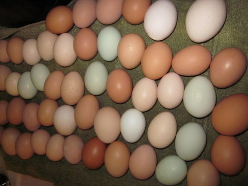 Eggs Suppliers, Eggs Exporters, Poultry Eggs Wholesale