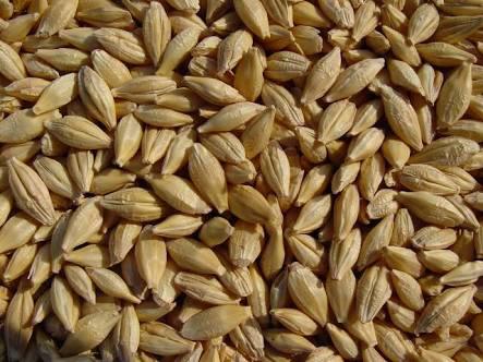 Golden Barley in   Near Vidya Devi Hospital