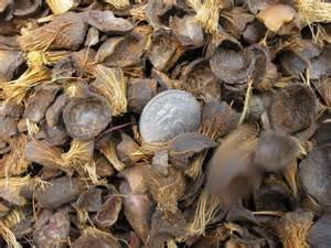 Palm Kernel Shell And Coconut Shells