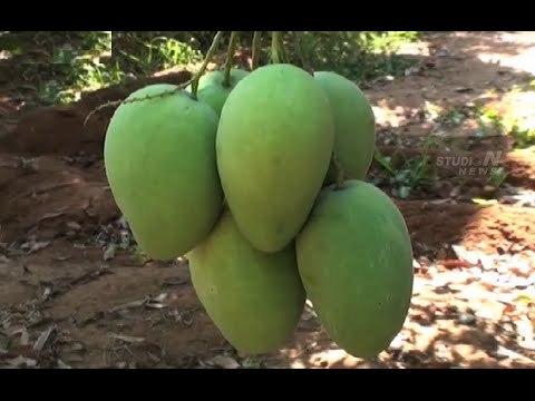 Mango In Hyderabad, Mango Dealers & Traders In Hyderabad, Telangana