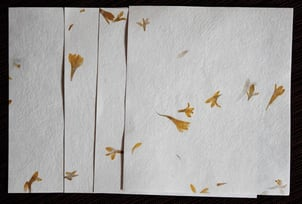 Seed Papers