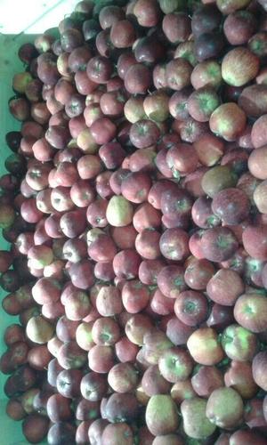 Fresh Apples in   Tal Halol