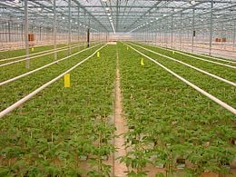 Eco Friendly Green House