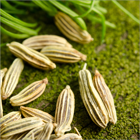Organic Pure Fennel Seeds