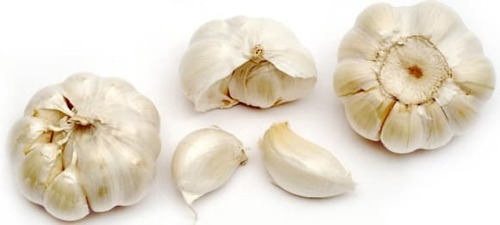 Fresh Garlic in   Kota