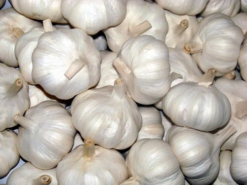 Garlic  in   Kota