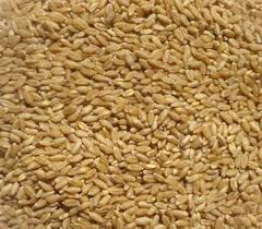 Clean Wheat