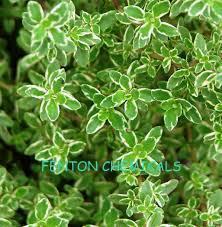Emulsifier For Rosemary Oil And Clove Oil