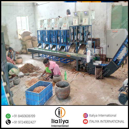Automatic Cashew Processing System in  Pandesara