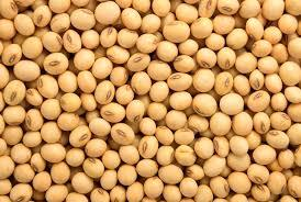 Dried Soybeans Non Gmo
