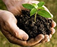 Organic Bio Fertilizers
