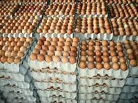 Brown Color Healthy Eggs