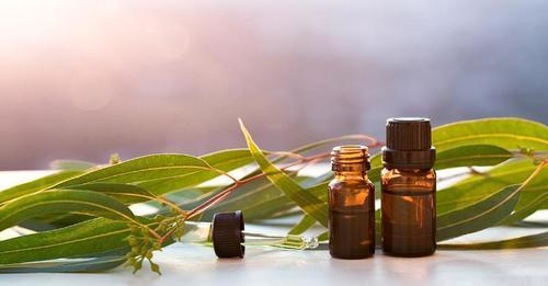 Eucalyptus Plant Oil