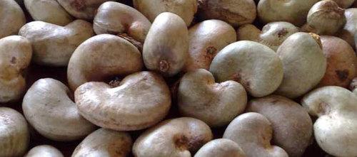 Raw Cashew Nuts in   Ikeja