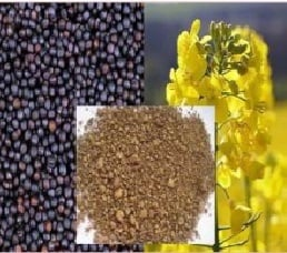 Rapeseed Extraction Meal