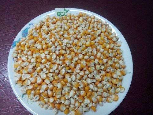 White Maize Corn