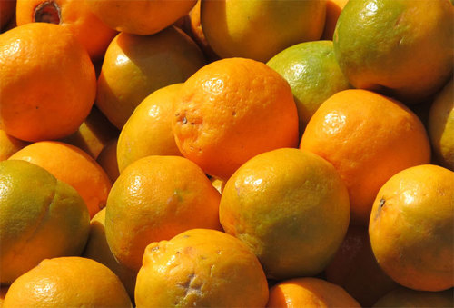 Nagpuri Orange (Santra)
