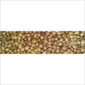 Finest Whole Coriander Seeds in   Chinthamani Bazar