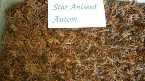 Star Aniseed Autom
