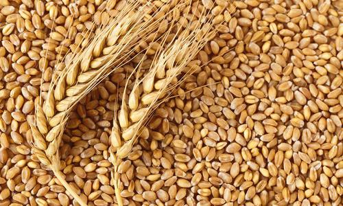 High Grade Wheat