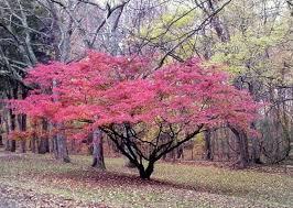 Ornamental Trees Landscaping Contractors