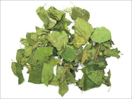 Dry Gymnema Sylvestre Leaves