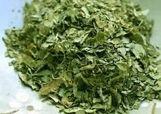Dry Moringa Oleifera Leaves in   Thirupalai