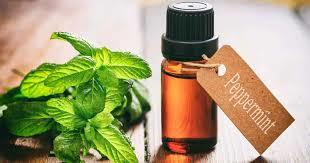 Peppermint Oil in  Rani Bagh