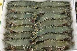Frozen Black Tiger Shrimps