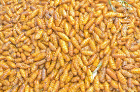 Silkworm Pupae in  New Area