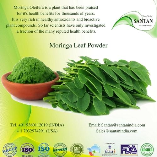 Organic Moringa Oleifera Leaf