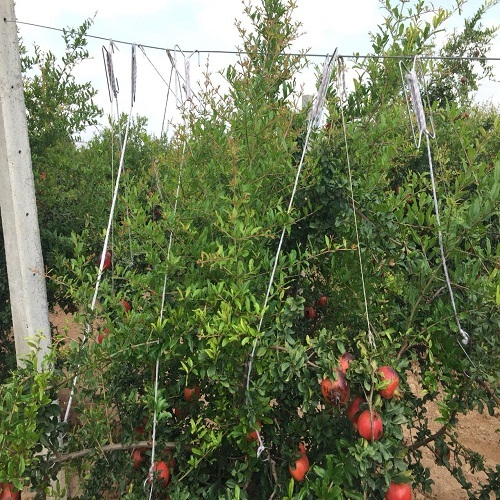 Pomegranate Plant Support Twine