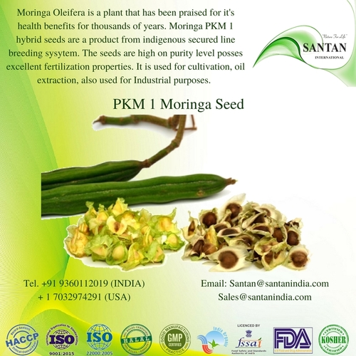 Moringa PKM 1 Seeds For Large Scale Plantation