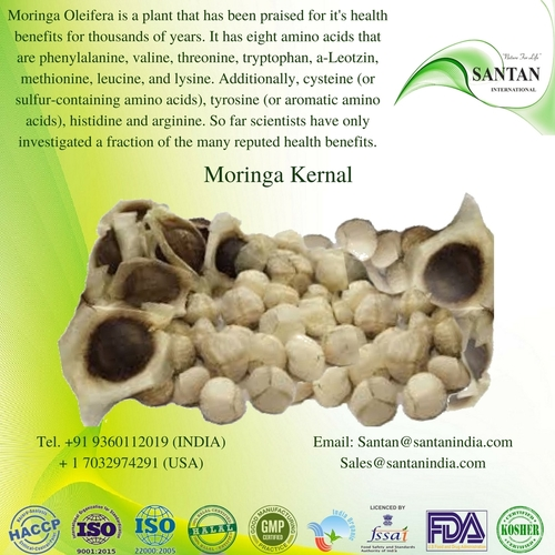 Moringa Seed Kernals For Oil Extraction in   Kumaramangalam (Post)