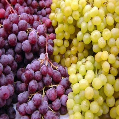 Grade A Fresh Grapes