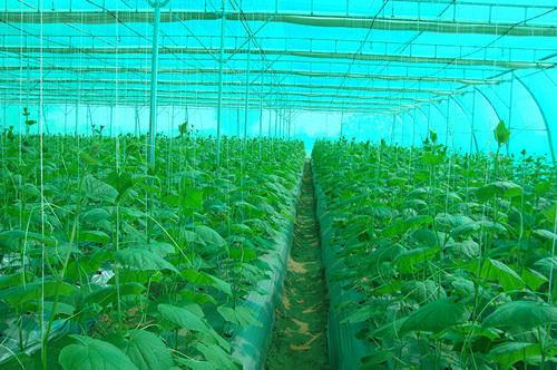 Green House HDPE Net