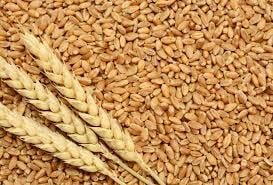 Quality Tested Wheat