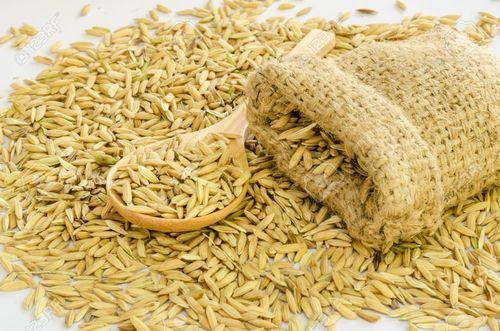 Hybrid Paddy Seeds