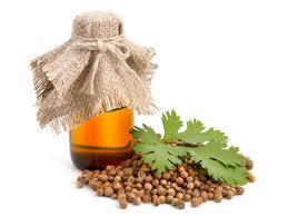 Natural Coriander Oil