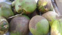 Water Coconut For Drinking