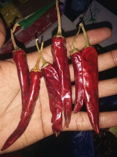red chillies endo 5
