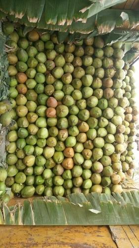 Organic Green Tender Coconuts