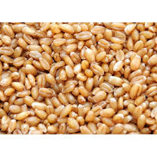 Best Quality Wheat