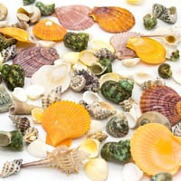 Natural Colorful Assorted Sea Shells