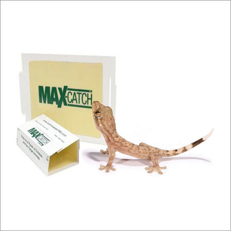 Tough Lizard Glue Trap