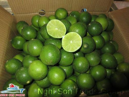 Fresh Green Lime Certifications: Phyto