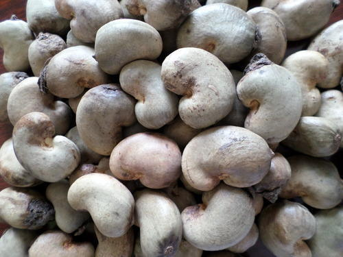 Cashews Nuts