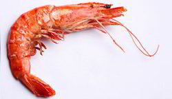 Shrimp In Mumbai, Shrimp Dealers & Traders In Mumbai, Maharashtra