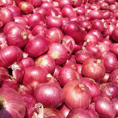 Fresh Nashik Red Onion in   Waghawadi Road