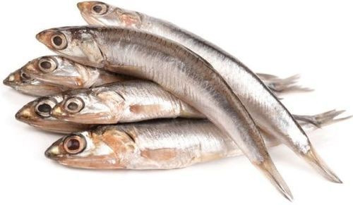 Anchovy Fish At Best Price In Chennai Tamil Nadu Jmj Exports